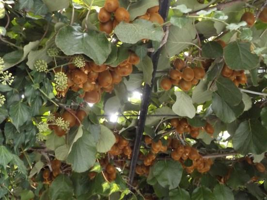 Kiwi i winogrona twoim przyjacielem