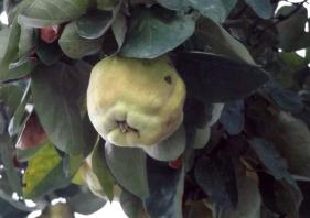 Połowę z ichnich owoców w ogóle pierwszy raz widziałem na oczy