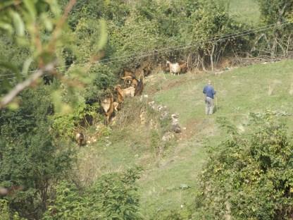 Owieczky z pasterzem