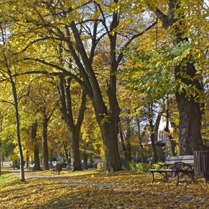 Jesieni piękna!