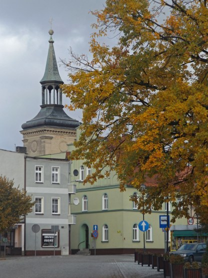 """Dąb """"Jan Paweł II"""" z kościołem św. Trójcy w tle"""