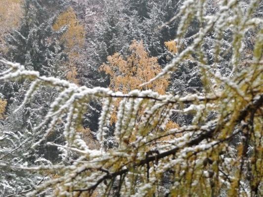 Kolory jesieni z zimowym feelem