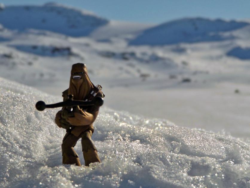 Chewbacca przyjechał ze mną na celebrację dnia Star Wars