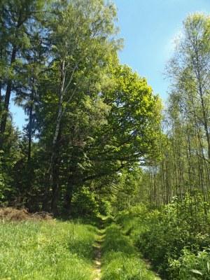 Droga z Długopola to dzikie lasy...
