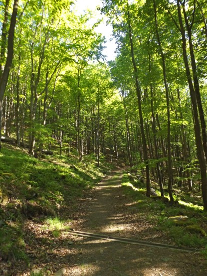 Las w pełni dnia...