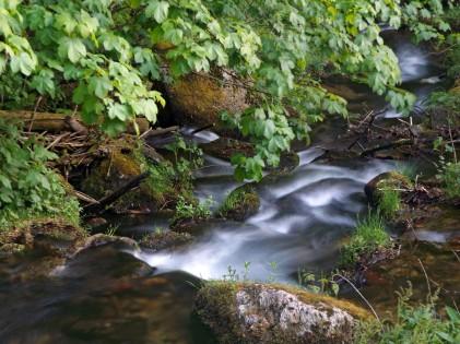 Rzeka Wilczka...
