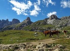 Valle Rimbon, krowia dolina.