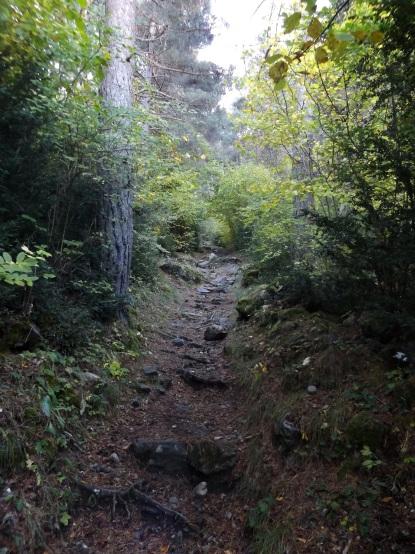 Hej przez las by się szło...