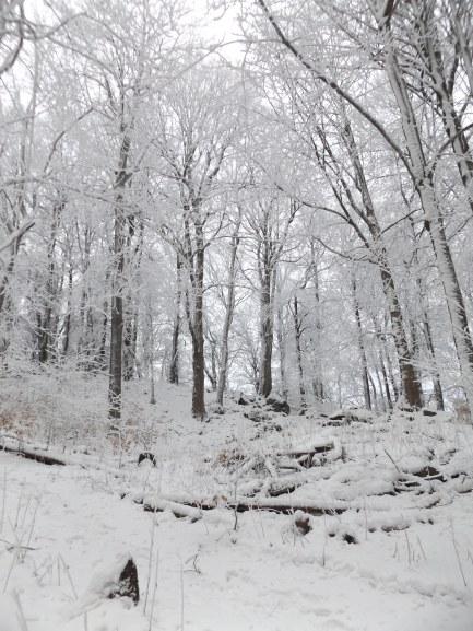 ...w Wałbrzyskich lasach.