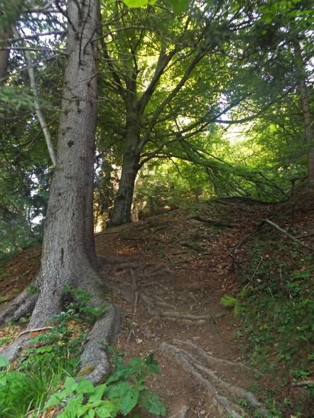 W lesie zielonym i dusznym.