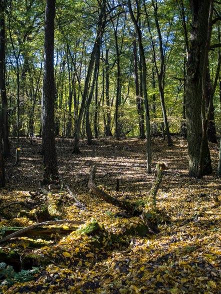 Lasy warte poznania.
