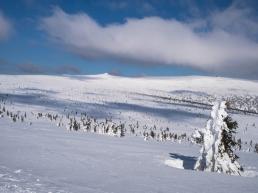Śnieżna łąka