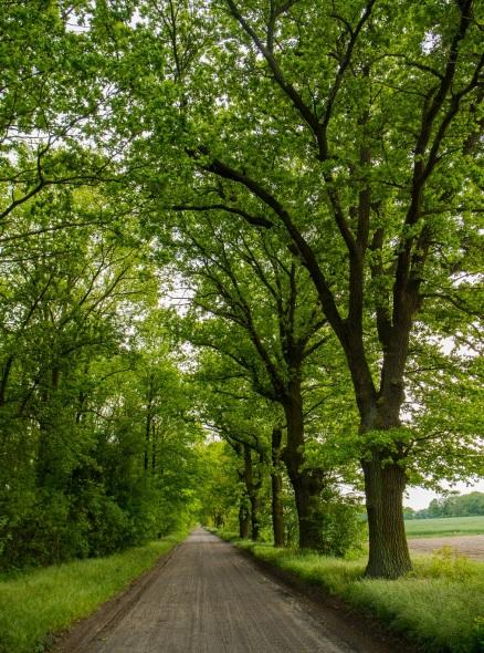 Droga do Trzebin