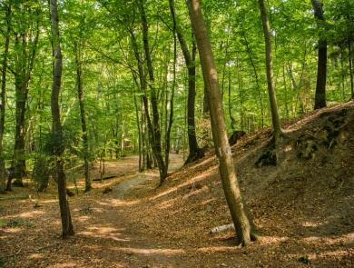 Czerwonym szlakiem z Grzybka