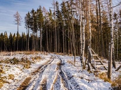 Kawałek lasem.