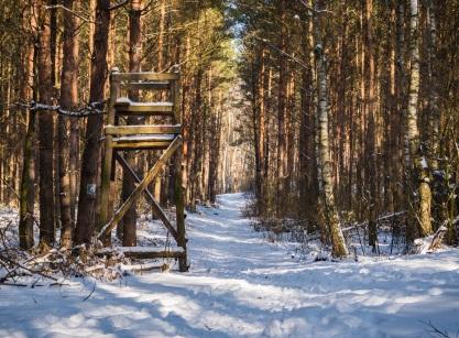 Spacer lasem to zawsze dobry pomysł.