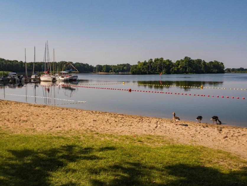 Karpicko, nad jeziorem Wolsztyńskim.